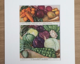 1959 Vegetables Original Vintage Print - Mounted and Matted - Retro Wall Art - Kitchen Decor - Cooking - Cabbage - Beetroot - Parsnip
