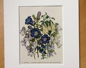 1948 Original Vintage Botanical Lithograph - matted & available framed - Botanical Art - Botany - Flowers - Garden - Jane Loudon Art