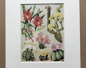 1940s Flowering Cacti Original Vintage Print - Mounted and Matted - Cactus - Desert - Botanical Art - Retro Decor - Available Framed