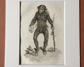 1800 Black Orang-utan Original Antique Engraving - Zoology - Natural History - Primate - Available Framed