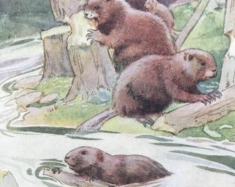 1919 Beavers Original Vintage Margaret W. Tarrant Illustration - Zoo - Animal Art - Available Framed - Nursery Decor - Children's Book