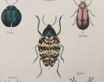 1845 Original Antique Hand-Coloured Steel Engraving - Coleoptera - Jardine - Entomology - Insect - Beetles - Bugs - Decorative Art