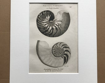 1809 Nautilus Pompilus or Pearly Nautilus Original Antique Engraving - Shell - Ocean Wildlife - Marine Decor - Available Matted and Framed