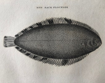 1812 Red Back Flounder Original Antique Engraving - Ichthyology - Fish Art - Fishing Cabin Decor - Available Framed