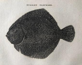 1812 Turbot Flounder Original Antique Engraving - Ichthyology - Fish Art - Fishing Cabin Decor - Available Framed