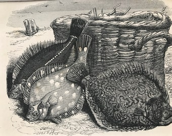 1863 Turbot, Plaice and Flounder Original Antique Print - Fish - Ocean Wildlife - Marine Decor - Mounted and Matted - Available Framed