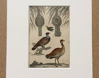 1840 Tropical Nests, Wood Grouse and Bustard Original Antique Hand-Coloured Steel Engraving - Bird - Ornithology - Available Framed