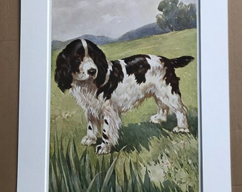 1926 Cocker Spaniel Original Antique Albert Kaye Print - Dog Print - Mounted and Matted - Available Framed
