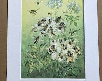1984 Hover Flies Original Vintage Print - Bee - Wasp - Entomology - Insect Art - Mounted and Matted - Available Framed