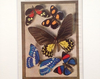 1940s Vintage Butterfly Photo Print - 'Exquisite Gems of the Insect World' - matted and available framed - 14 x 11 inches - Entomology