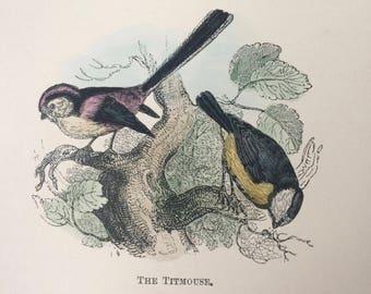 1907 The Titmouse Original Antique Matted Hand-Coloured Engraving - Ornithology - Bird Decor - Wildlife - Decorative Art - Available Framed