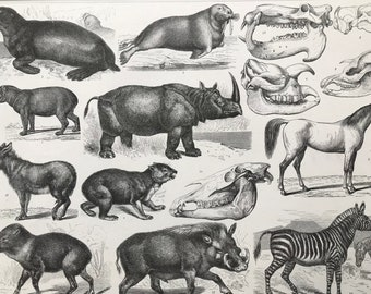 1869 Zoology Large Original Antique Illustration - Seal, Walrus, Rhinoceros, Tapir, Donkey, Horse, Zebra, Warthog- Mounted and Matted