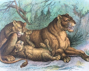 1896 Lioness and Cubs Original Antique Chromolithograph - Wildlife - Natural History - Mounted and Matted - Available Framed