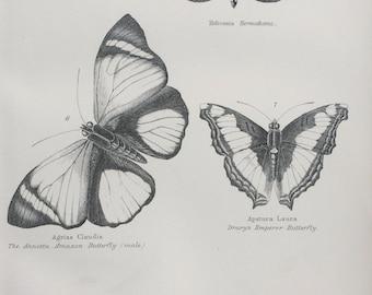 1891 Butterflies - Hermathaena, Annetta Amazon, Emperor Original Antique Steel Engraving - Encyclopaedia Illustration -  Entomology