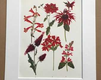 1924 Original Vintage Botanical Print - Bee Balm, Verbena, Thistle - Garden - Horticulture - Mounted and Matted - Available Framed