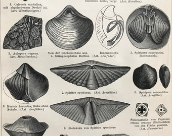 1897 Devonian Formations Original Antique Print - Mounted and Matted - Fossils - Paleontology - Available Framed