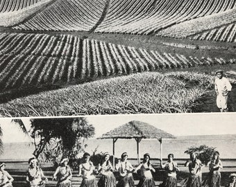 1940s Scenes of Work & Play in Sunny Hawaii Original Vintage Print - Pineapple Field - Honolulu - Mounted and Matted - Available Framed