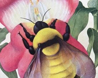 1940s Bumblebee on a Snapdragon Original Vintage Print - Mounted and Matted - Insect Art - Bee - Available Framed