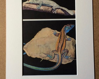 1968 Original Vintage Reptile Print - Mounted and Matted - Flat-Tailed Gecko and Rainbow Whiptail - Available Framed