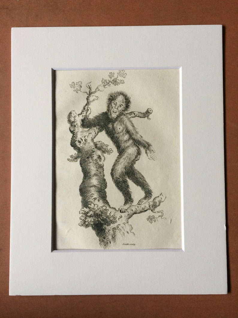 Primate Zoology Available Framed Natural History 1800 Orang-utan Original Antique Engraving