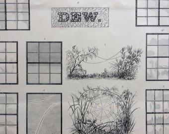 1880 DEW Original Antique Steel Engraving - Wall Decor - Victorian Decor - Encyclopaedia Illustration - Grass - Windows