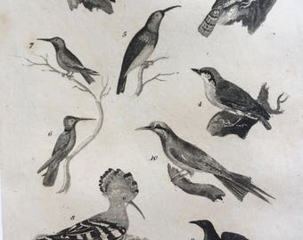1822 Original Antique Matted Bird Engraving - Woodpecker, Wryneck, Nuthatch, Creeper, Hummingbird, Bee Eater - Ornithology - Framed Decor