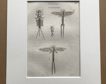 1809 Swammerdamiana - Ephemera and Larva Original Antique Engraving - Moth - Entomology - Available Matted and Framed