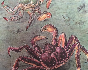 1988 Crabs Original Vintage Print - Crustacean - Ocean Wildlife - Marine Decor - Mounted and Matted - Available Framed