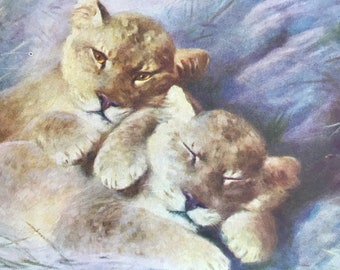1925 Lion Cubs Original Vintage Print - Animal Art - Mounted and Matted - Available Framed