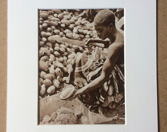 1940s West Africa - Woman opening Cacao Pod Original Vintage Sepia Photo Print - Mounted and Matted - Available Framed