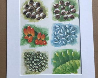 1984 Insect Eggs Original Vintage Print - Insect Art - Mounted and Matted - Available Framed