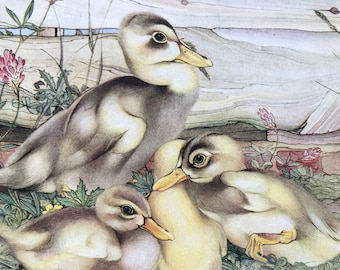 1938 Ducklings Original Vintage Print - E.J. Detmold - Domestic Animals - Nursery Decor - Mounted and matted - Available Framed