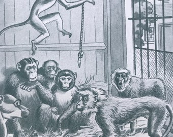 1925 Monkeys in Zoo Original Vintage Print - Animal Art - Mounted and Matted - Available Framed