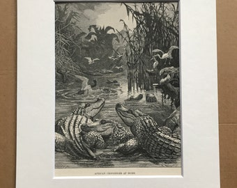 1863 African Crocodiles at Home Original Antique Print - Reptile - Wildlife - Mounted and Matted - Available Framed