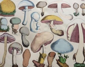 1890 Large Original Antique Fungi Lithograph - Mushroom -  Botany - Botanical Art - Wall Decor - Kitchen Decor - Agaric