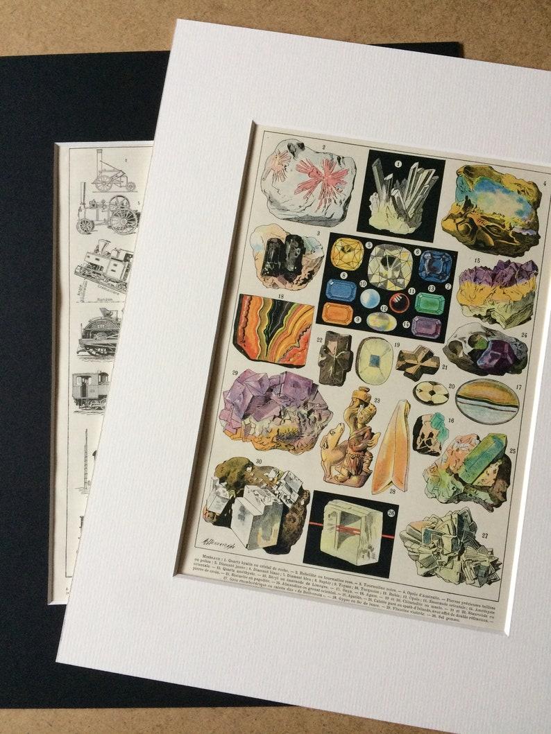 Decorative Print Nature Mammal Zoology Wildlife Wall Decor 1896 Otter Original Antique Matted Chromolithograph