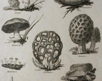 1819 Fungi Original Antique Engraving - Available Mounted and Matted - Botanical Art - Botany - Mushroom - Available Framed
