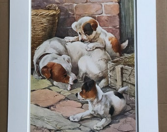 1926 Fox Terriers Original Antique Albert Kaye Print - Dog Print - Mounted and Matted - Available Framed