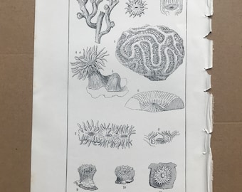 1858 Original Antique Engraving - Recent Corals, with their Polypes - Geology - Fossil - Palaeontology - Decorative Art