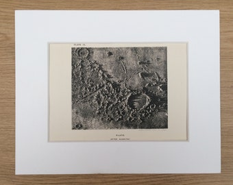1893 Plato Lunar Crater Original Antique Matted Lithograph - Astrology - Astronomy - Vintage Wall Decor - Available Framed