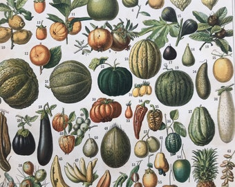 1897 Fruit Original Antique Print - Botanical Decor - Botany - Kitchen Decor - Mounted and Matted - Available Framed