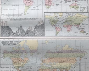 1876 Zoological Chart and World Map showing Principal Plants Original Antique A & C Black Map - World Map - Animals - Botany