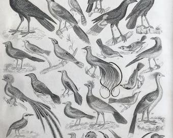 1858 Ornithology Original Antique Engraving - Victorian Decor - Bird Skeleton - Ostrich - Owl - Bird of Prey - Bird Art - Available Framed