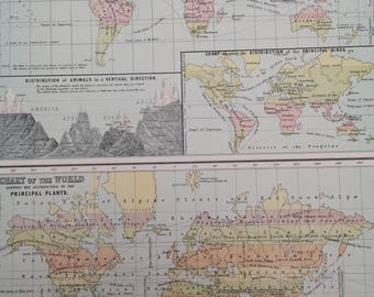 1898 Large Original Antique A & C Black World Map - Zoological Chart of the World and World map showing principal Plants - Gift Idea