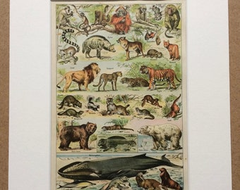 1923 Mammals Original Antique Print - Mounted and Matted - Decorative Art - Wall Decor - Vintage Animal Art - Wildlife Decor