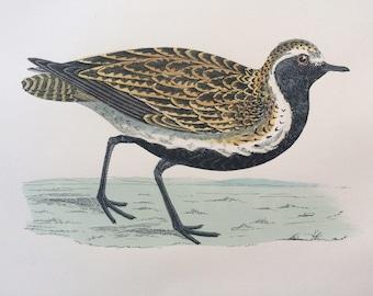 1903 Golden Plover Original Antique Matted Hand-Coloured Engraving - Ornithology - Available Framed - Wildlife - Decorative Art - Game Bird