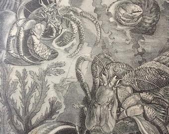 1875 Hermit Crab Original Antique Print - Crustacean - Marine Decor - Ocean Wildlife
