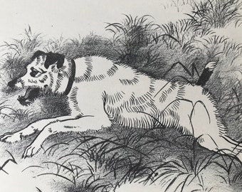 1950 Old Wire-Haired Fox Terrier Original Vintage Illustration - Maurice Wilson - Dog Drawing - Mounted and Matted - Available Framed