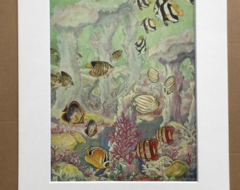 1951 Butterfly Fishes and their Allies Original Vintage Print - Marine Decor - Ocean Wildlife - Mounted and Matted - Available Framed