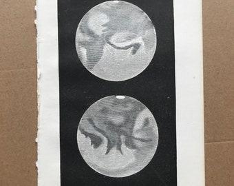 1899 Mars in 1862, showing South Polar Regions Original Antique Print - Astronomy - Moon